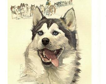 "Siberian Husky -  Dog vintage print 1975  -  8.1 "" x 11.6  inches - A11"