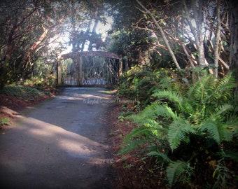 Ft Bragg - Ft Bragg photo - Northern California - photograph - Pacific Coast - Ft. Bragg garden - garden - garden photo - Botanical Garden