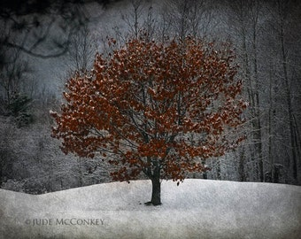 winter tree landscape photography fine art photography nature photography home decor office decor