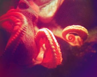 Red Octopus Photograph Tentacles Underwater Nautical Sealife 8x10 photo ruby wall art decor beach
