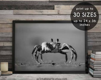 Crab print, crab, wilderness nursery, wall prints, farm nursery, digital download art, trends, modern nursery art, nursery safari print, 78