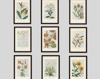 Any 4 Botanical Prints, Set of 4, Antique Botanical, Botanical Print Set, Set of Prints, Cottage Decor, Victorian, Lithograph, Wildflower