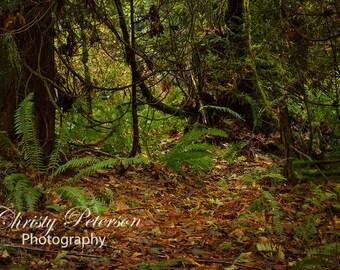 Forest Glen Digital Background for Composites