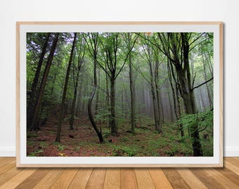 Foggy forest misty fog landscape mountain green print photo poster trees woodland wall art digital print download printable living decor