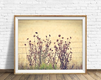 """landscape, nature prints, floral, instant download art, printable art, photography, instant download, farmhouse chic -""""Barbed Wire Thistles"""""""