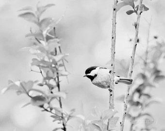 black and white bird photography, chickadee photography, nature wall art, bird art, bird prints, black and white art no 2