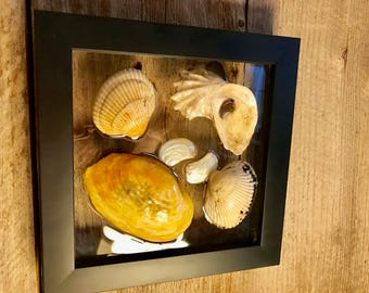 """Shell Window Art Framed Clam Oyster Cockle and Angel Wing Shells from Cape Cod 7.5 """" x 7.5"""" Coastal Wall Hanging Nautical Decor"""