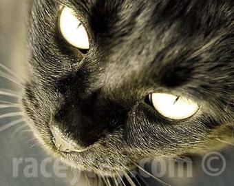 Black Cat Art, Nature Photography, Pet Gift, Black & Gold Cat Print, Large Wall Art