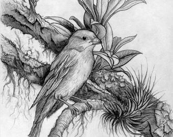Tree pencil drawing etsy