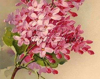 PINK LILAC SPRIG, Vintage - Catherine Klein.  Art Print, Fabric Block, Heat Transfer or Waterslide Decal.  Size Options.