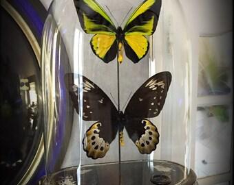 Vintage glass globe (rare) Butterfly couple
