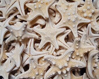 "White Knobby Starfish (5 pcs.) - (1-2"") - Protoreaster Nodosus"