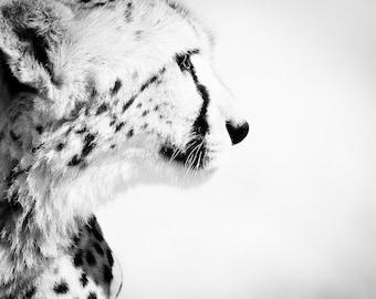 Wildlife Photograph Nature Home Decor - Cheetah Black and White Fine Art Animal Photography