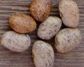 Blue Speckled Tepary Bean, old heirloom  15+ Seeds, rare