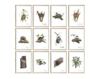 Bird Nests Art Print SET OF 12. UNFRAMED Bird Eggs Home Decor. Birds Wall Art. Antique Illustration Bird Nest Chart Rustic Country