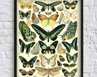 Antique butterfly wall art print butterfly collection print butterfly gallery wall art decor botanical illustrations vintage poster Art-143