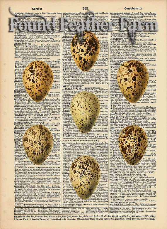 "Vintage Antique Dictionary Page with Antique Print ""Egg Collection"""