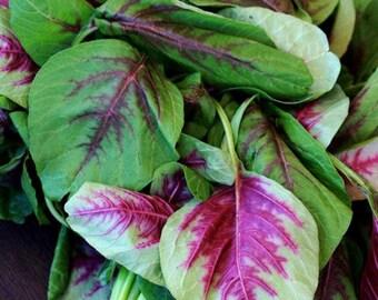 700 Red Amaranth Seed (M)