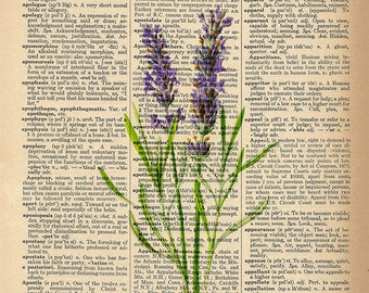 Dictionary Art Print - Beautiful Lavender Flower - Upcycled Vintage Dictionary Page Poster Print - Size 8x10