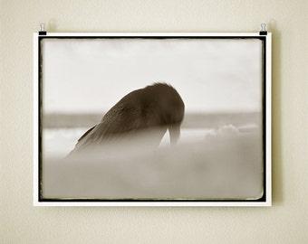 CROW PRAYER - 8x10 Signed Fine Art Photograph