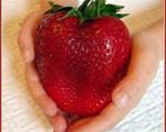 100 Giant Strawberry Seeds-1275