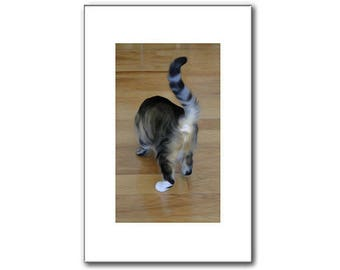 Cat Photo, Kitten Print, Silly Picture, Cat Butt