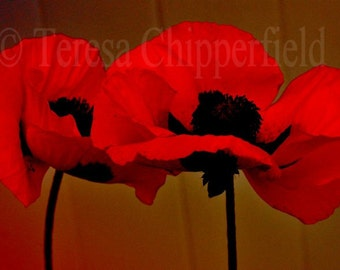Mysterious Red Oriental Poppies, Fine Art Photography, 8 x 12, Pretty Ladies Dancing in the Moonlight, Festive, Chic, Wall Art, Floral Decor