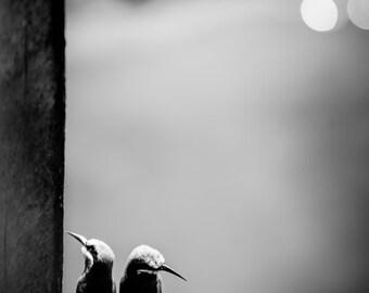 Bird Fine Art Photography - Wildlife Wall Art  - Bee-Eater Contemporary Animal Black and White Photo - Monochrome Home Decor Print