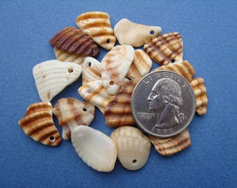 20 Sea shell charms-drilled sea shells-sea shell beads-Craft Supplies-Jewelry Supplies-Handmade