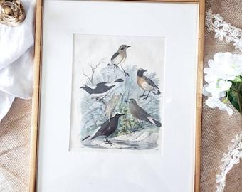 Big Bird framed 1800s lithograph
