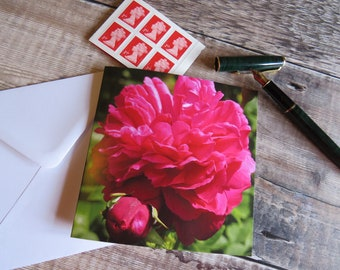 Deep Pink Rose 'Full Bloom' Greeting Card Left Blank for Personal Message