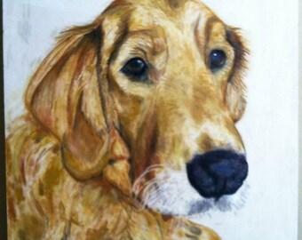Custom Pet Portraiture