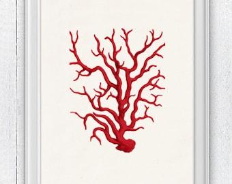 Red coral - Antique Illustration , sea life print- Marine  sea life illustration A4 print SWC022