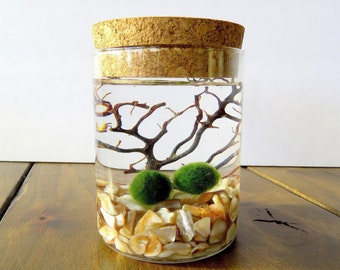Terrarium Kit, Marimo Moss Ball Terrarium Corked Jar, Customizable, 23 Colors, Gift Wrapped, Gift Message, Fast Shipping