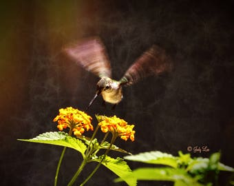 Hummingbird Photograph, Bird Photography, Nature Photography, Wall Art, Home decor, Hummy, Garden Photo
