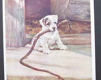 The Terrior Puppy illustration