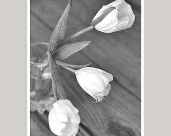 Black and white photography flower photo print, grey and white floral picture, still life flower tulip print rustic wall art, vertical decor