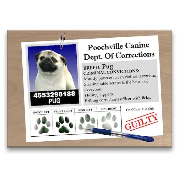 Pug Rap Sheet Fridge Magnet No 1 Fawn