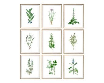Kitchen Herbarium Art Print SET of 9. kitchen plants, kitchen wall decor, coriander print, thyme, chamomile, sage, bay, basil, 8x10 print
