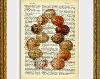 EGGS 04 - old book page art print - upcycled antique dictionary page with an antique egg illustration - vintage home decor - kitchen art