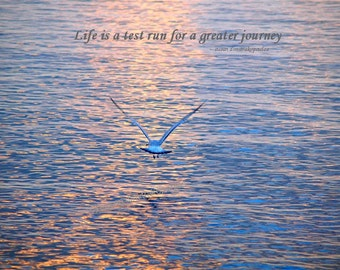 Life Is A Test Run poster, Jonathan Livingston Seagull inspired, wall art, home decor, gift 20, fine art photograph, friendship