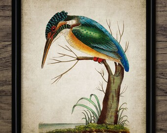 Kingfisher Print - Vintage Kingfisher Illustration - Kingfisher Decor - Digital Art - Printable Art - Single Print #259 - INSTANT DOWNLOAD