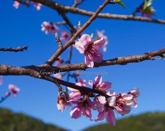Spring Blossom, Photography, Home Decor