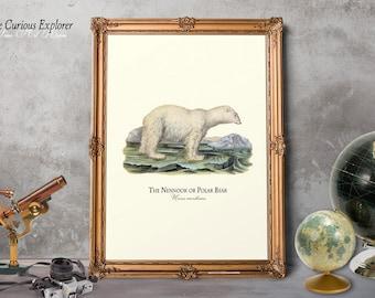 Bear Wall Art, Polar Bear Wall Art, Antique Home Decor, Name Day Gift Art, Polar Bear Poster, Polar Bear Decor, Animal Posters - E18_27