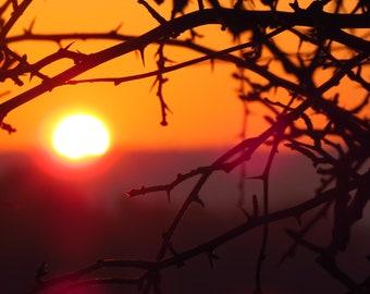 Framed photograph : SUNSET SILHOUETTE