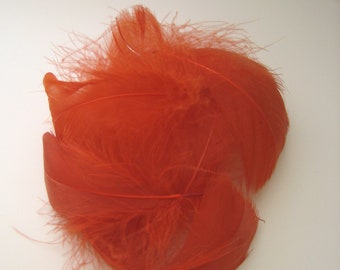 Burnt Orange Goose Coquille Feathers  / 10 Loose Feathers