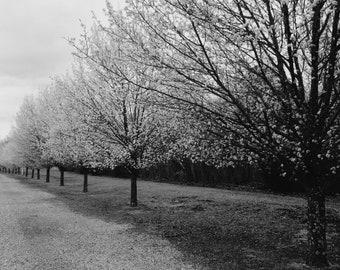 a walk along the trees