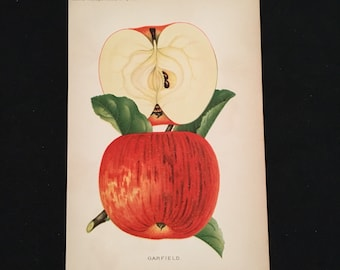 Garfield Apple - 1889 Print, Original Antique Print, Vintage Kitchen Decor