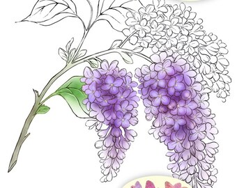 Digital Stamp Instant Download - Lilac 2 - digistamp - Lilac Stem w/ Three Clusters - Floral Line Art for Cards & Crafts by Mitzi Sato-Wiuff