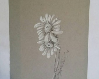 Original Charcoal Daisy Drawing 5.5x8.5/nature picture flowers